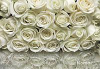 """Фотообои """"Белые розы"""" 368х254 см"""