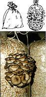 Полиэтиленовые пакеты для выращивания грибов 37*90