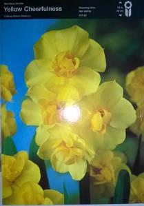 Нарцис подвійний Yellow Cheerfulness