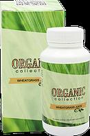 Detox Wheatgrass (Детокс Витграсс) очищения организма от шлаков и токсинов