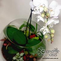 Флорариум с орхидеями