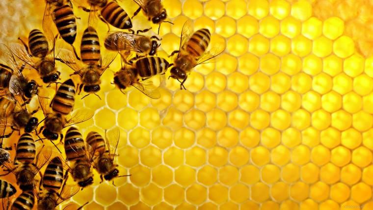 Написание статьи о пчеловодстве, видах пчел и правильном их содержании для интернет-магазина.