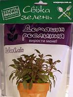 """Домашнее растение """"Шалфей"""", 0,5л"""
