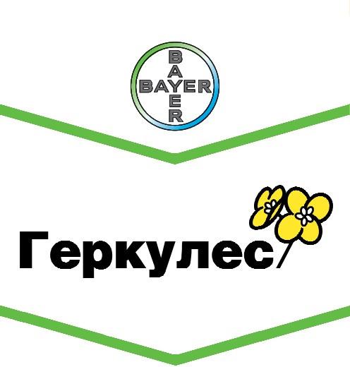 Семена рапса озимого Геркулес (Bayer)