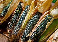 Кукуруза Oaxacan Green Dent