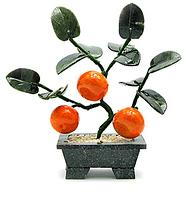 Мандариновое дерево 3 мандарина
