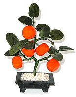 Мандариновое дерево 5 мандаринов