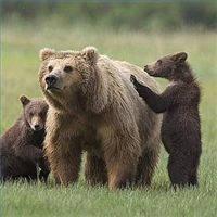 Животные Карпат, которые представляют опасность для человека. И что делать при встрече с ними.