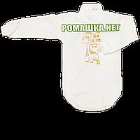 Детский боди-гольф р. 68 с начесом ткань ФУТЕР (байка) 100% хлопок ТМ Алекс 3189 Бежевый Б