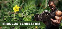 Трибулус террестрис и его польза для спортсменов