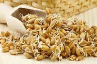 Зародыши пшеницы, раф., косм.