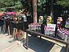 Организация лимонадного бара, фото 4
