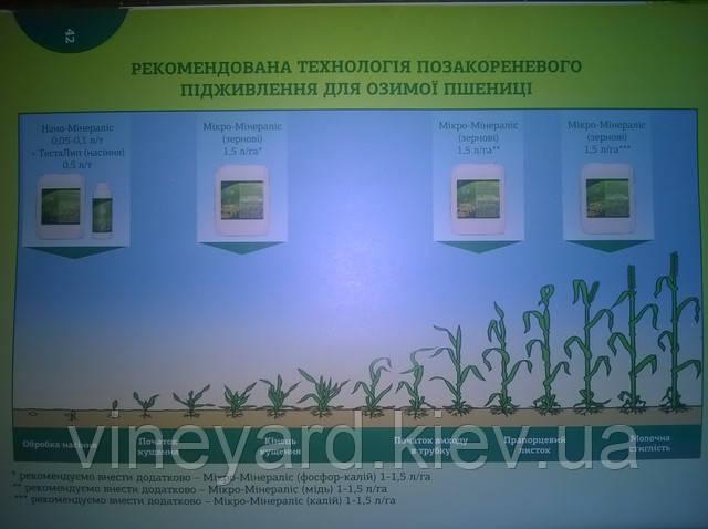 Обработка семян удобрениями, наноминералис, Минералис, фосфор, калий, подкормка пшеницы, протравить семена пшеницы,