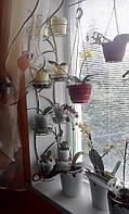 Цикламена-3, 8 фиалок, подставка для цветов, фото 1