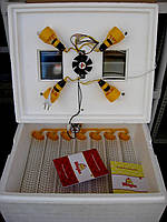 Инкубатор Теплуша - автоматический переворот, вентилятор, цифровой терморегулятор
