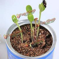 Мини можете цветы семена растений в офисе в помещении мини-завод