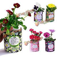 DIY Mini лаки зодиака цветочный горшечных растений офисный настольный декор