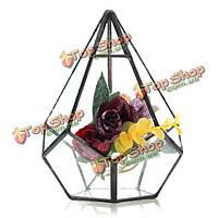 Суккулент треугольник парникового стекло террариума поделки микро пейзаж стеклянная бутылка