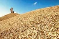 Мировой рынок зерна — новые возможности для Украины