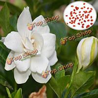 50шт сад белые семена гардения открытом воздухе ароматные цветы