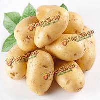 20шт картофеля семена питания вкусные зеленые овощи
