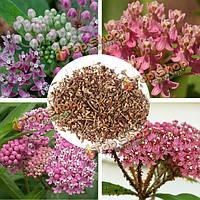 Многолетние травы 100шт Болото Милкуид семена Спирея семена цветов
