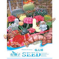 10шт смесь семян кактуса сочных семена цветов