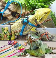 Родовое регулируемые рептилии ящерицы Жгут поводок поводок любимчика