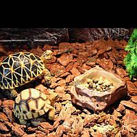Рептилии фидерные еды воды блюдо миска аксессуары черепки декора любимчика гада продукта для террариума
