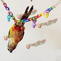 Питомец попугай попугая попугай аратинга птица жевать укусов качели клетках цепи игрушек