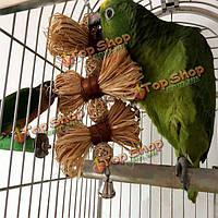 Домашнее животное попугай Conure попугай попугая волнистого попугайчика птиц жевать укусов качели называемые клетки игрушки