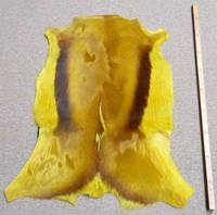 Шкура настоящей газели из Африки крашенной в желтый цвет, фото 1