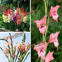 100шт смешанный цветной цветок гладиолуса отбирает сад многолетняя трава консервированный завод