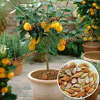 50шт сада лимона семена дерева цитрусовых Limon двор heliophile DIY растение в горшке