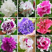200шт смесь цветов двойной лепесток семена петунии hybrida сад балкон декоративные цветочные растения