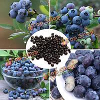 30шт семена бонсай черники сад фрукты завод