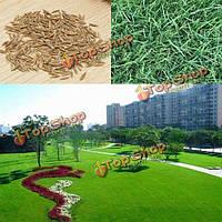 10000шт овсяница тростниковая трава семена садовых идеальный газон