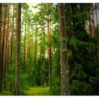 Отдушка Хвойный лес, 1 литр