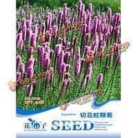 40шт кнопка сад SnakeRoot фиолетовые семена цветов многолетнее травянистое растение
