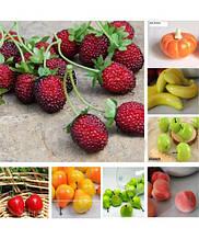 Декоративные ягоды, фрукты, овощи