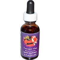 Flower Essence Services, Quintessentials, Trumpet Vine, Flower Essence, 1 fl oz (30 ml)