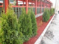 Цветная декоративная древесная мульча из щепы красная Red Укрмалч Ukrmalch