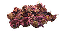 Эхинацея пурпурная 100 грамм (Echinacea purpurea) цветок