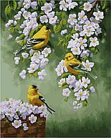 Картина-раскраска без коробки Идейка Зяблики на яблоне худ Форест Криста (KHO2427) 40 х 50 см