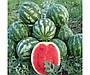 Сорт арбуза Стетсон F1 ультра-ранний гибрид с округлыми плодами, хрустящей мякотью высоким содержанием сахара , фото 2