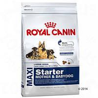 Корм для собак (Роял Канин) ROYAL CANIN Maxi Starter 15 кг - для беременных или кормящих собак и щенков