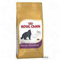 Корм для кошек (Роял Канин) ROYAL CANIN British Shorthair 10 кг - для взрослых британских кошек