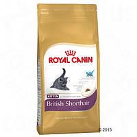 Корм для кошек (Роял Канин) ROYAL CANIN Kitten British Shorthair 10кг-для котят британской короткошерстной
