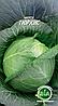 Капуста Тюркиз (1 г.) (в упаковке 20 пакетов)