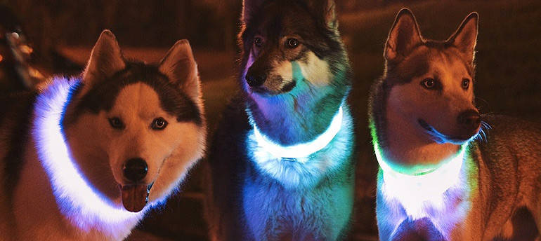 Светящийся ошейник для собак в виде жемчужин Pet's simulated pearl gleamy necklage, фото 2